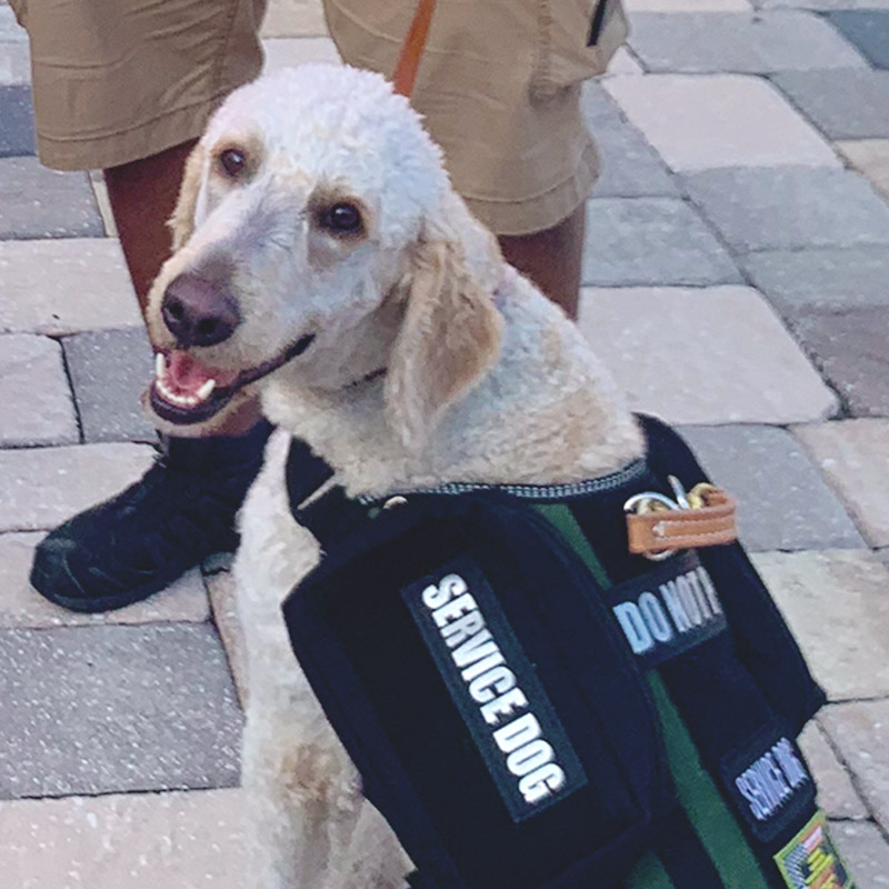 Photo of Bryson the Service Dog after he graduated